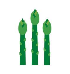 Asparagus green sprouts vector