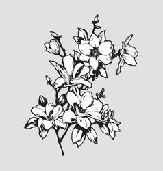 Magnolia twig vector