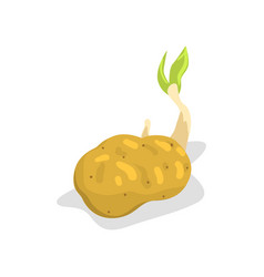 Potato with green sprout healthy organic food vector