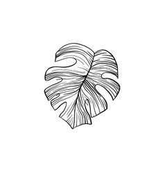 silver cloud monstera hand drawn vector image