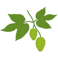 hop plant with leafs vector image