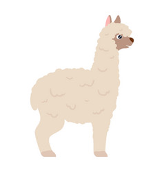 Cute white lama alpaca side view vector