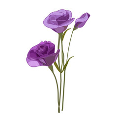 Eustoma icon on a white background violet vector