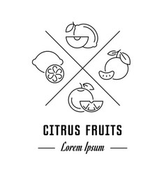 line banner citrus fruits vector image