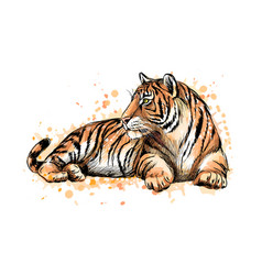 portrait a lying tiger from a splash of vector image