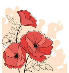 Red poppy flowers vector