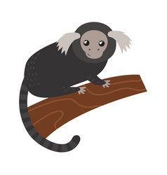 Capuchin monkey rare animal vector