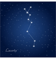 Lacerta star constellation vector