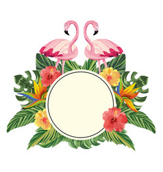 Tropical flamingos cartoon vector