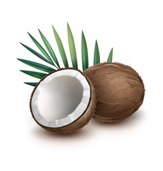Whole and half coconut vector