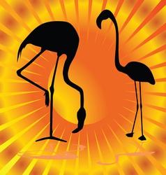 flamingo on orange background vector image