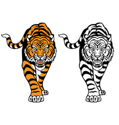 Angry roaring tiger front view vector