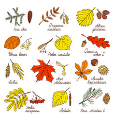 Autumn leaves and tree seeds vector