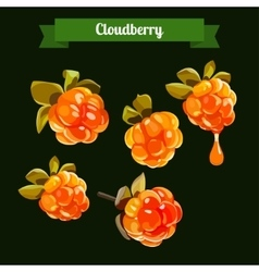 colorful branch of Cloudberry vector image