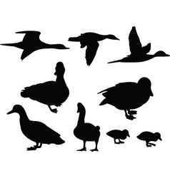 Duck collection vector