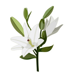Lilies icon on a white background lily vector