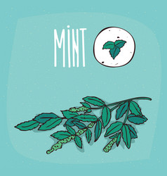 set of isolated plant mint leaves herb vector image