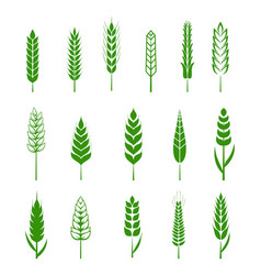 set simple wheats ears green icons and grain vector image