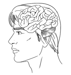The human brain vector image