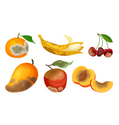 Garden fruits with skin covered with stinky rot vector