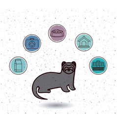 Isolated ferret and pet icon set design vector