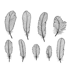 set of hand draw feathers isolated on white vector image