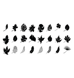 set silhouettes autumn leaves vector image