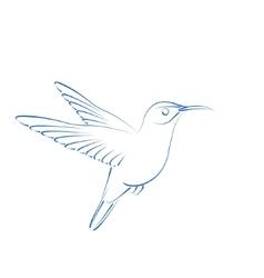 Sketched hummingbird colibri vector image