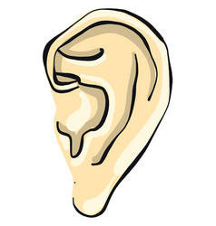 Small ear on white background vector