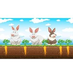 Three rabbits in the carrot farm vector image