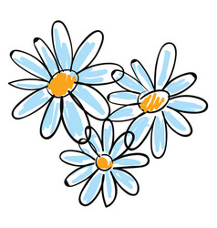 White chamomile flowers on white background vector