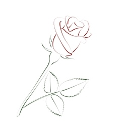 Beautiful sketched rose vector image vector image