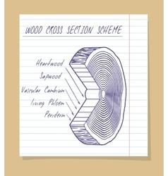 Wood cross section scheme sketch vector image