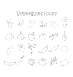 collection of vegetables vector image