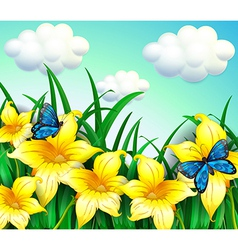 A garden with yellow flowers and blue butterflies vector image