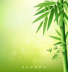 Bamboo green leaf vector