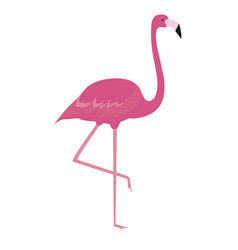 colorful cartoon pink flamingo on one leg stands vector image
