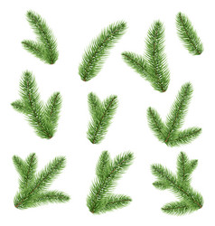 fir-tree branch isolated vector image