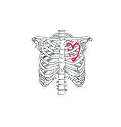 heart in skeleton chest t-shirt vector image