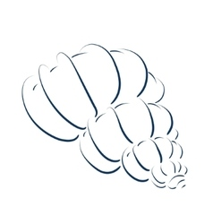 Perfect sketched seashell vector