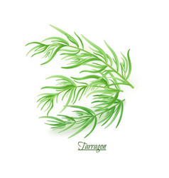 Sprigs of fresh delicious tarragon in realistic vector