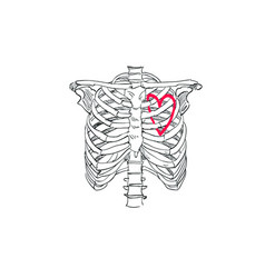 the heart in the skeleton of the chest t-shirt vector image