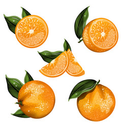orange fruit isolated set vector image