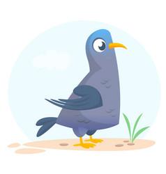 213pigeon vector image