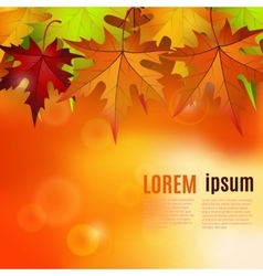 autumn background with red and yellow leaves vector image