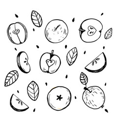 minimalistic sketch of whole apples cut apple vector image
