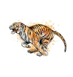 tiger running from a splash watercolor hand vector image
