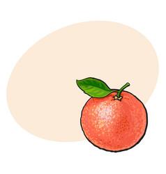 whole shiny ripe pink grapefruit red orange with vector image