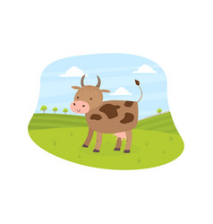 cow pasturing on meadow summer rural landscape vector image