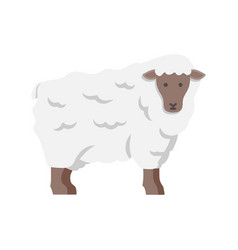 lamb sheep icon vector image